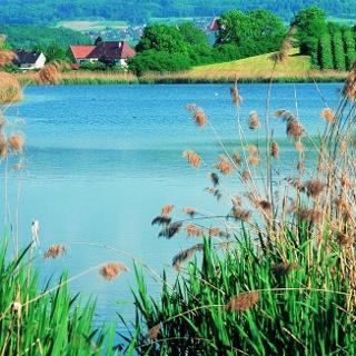 Bifangweiher Salem-Mimmenhausen