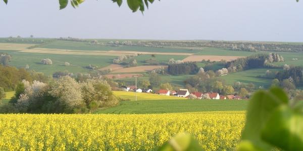 Mauschbach im Frühling