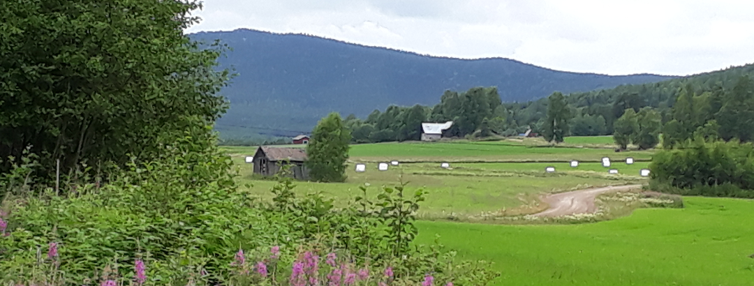 The road to Stråsjö