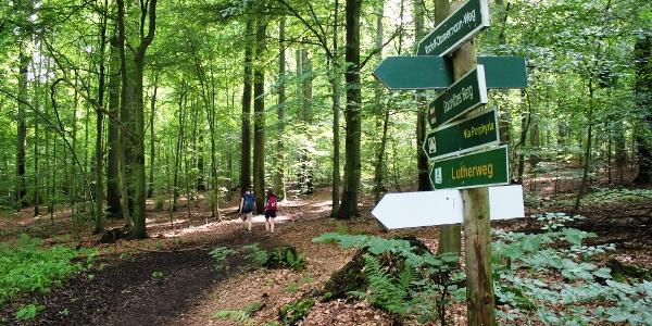 Wanderer am Rochlitzer Berg