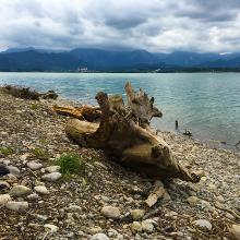 Holz am Forggensee