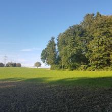 Auf dem Dinkelberg