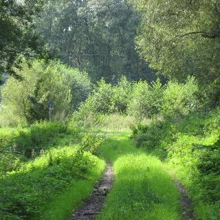 Waldweg im Tenstedter Bruch