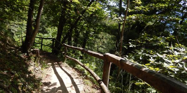 Waldweg Collina Alta