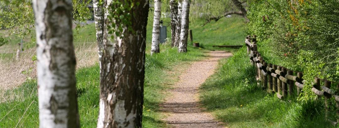 Keltischer Baumkreisweg