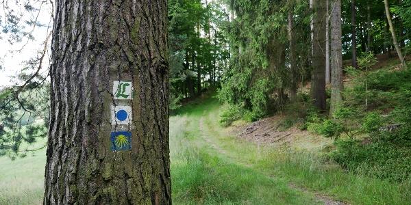 Lutherweg: Von Tambach-Dietharz nach Gotha