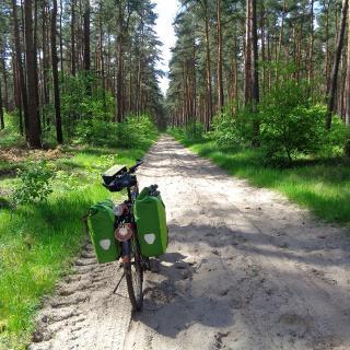 Weg nahe Angern (Mai 2017)