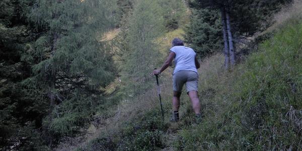 steile Wald- und Wiesenflanke