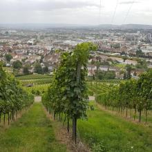 Blick auf Heilbronn vom Wartberg