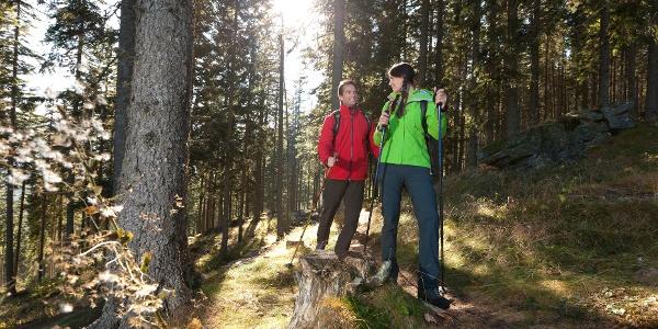 Waldreichtum der Steiermark