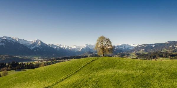 Wittelsbacher höhe bei Ofterschwang im Frühling