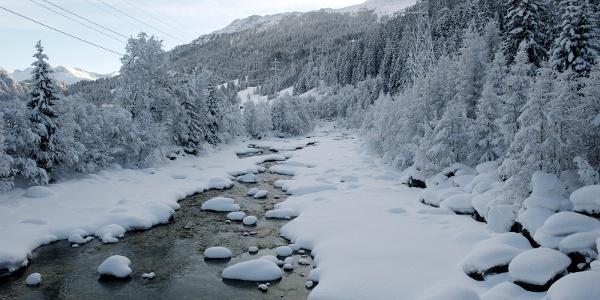 Tallopie Rheinwald