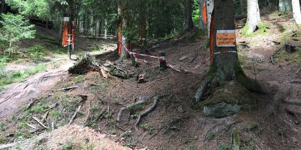 Downhillstrecke am Sommerberg