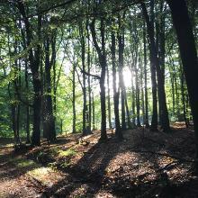 Majestätische Buchenwälder in der Abendsonne