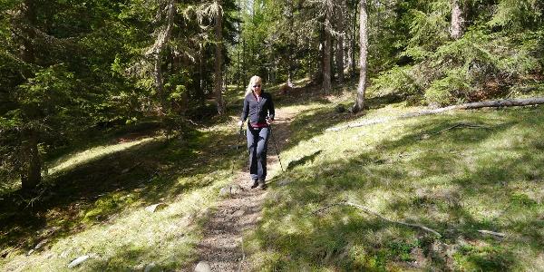 Im lichten Wald geht es Richtung Kaserfeld Alm.