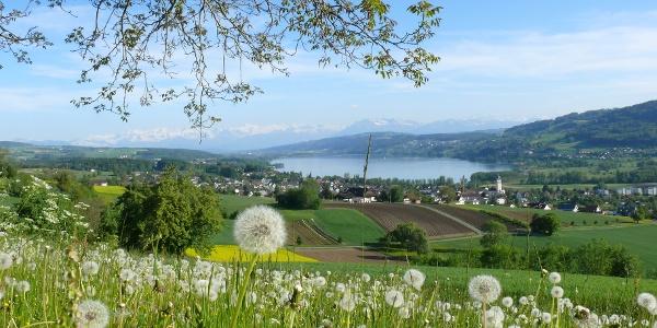 Blick vom Eichberg, Seengen Richtung Hallwilersee
