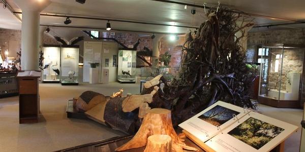 Naturkundemuseum auf dem Gelände der Burg Lichtenberg