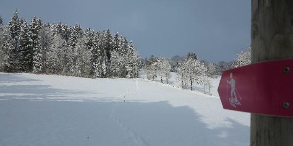 Die Schneeschuhroute ist mit pinkfarbenen Wegweisern markiert.