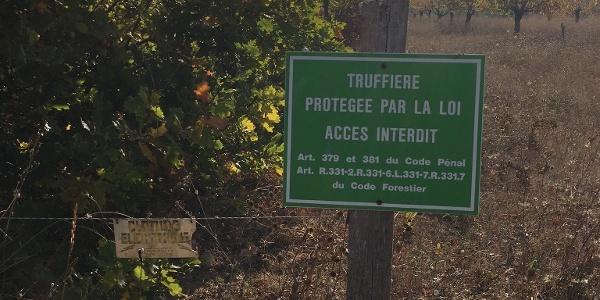 Truffle area