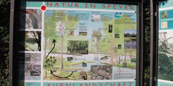 """Infotafel """"Natur in Speyer"""""""