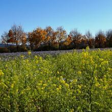 Blühende Felder, auch im Herbst