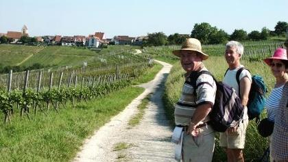 «Markgräfler Wiiwegli» - auch beliebt zum Wandern