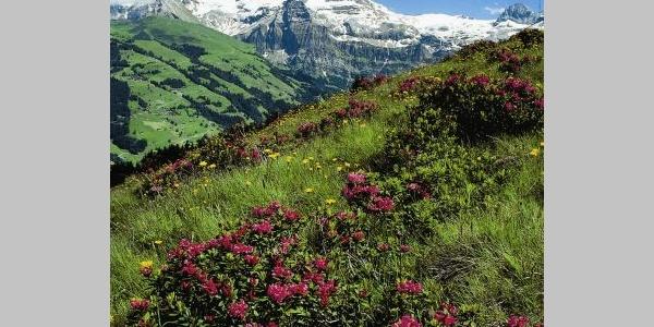 Alpenblumenweg (Variante A)