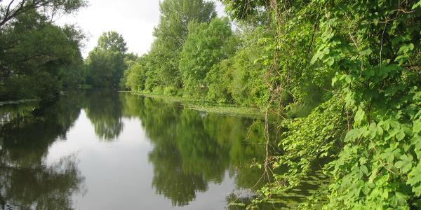 Auwald an der Werse