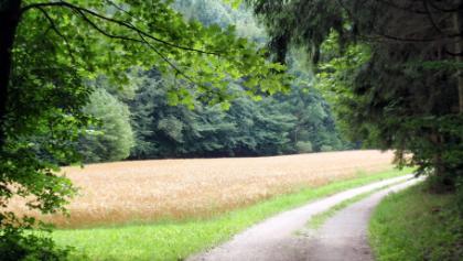 bei Berg bei Neukarkt in der Oberpfalz