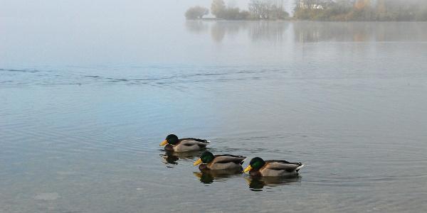 Am Ufer des Grundlsees in Gößl