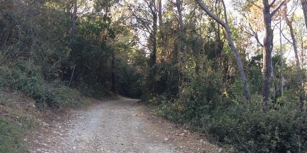 Schotter- und Forstwege