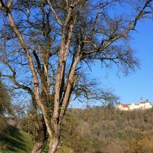 Blick auf Schloss Langenburg