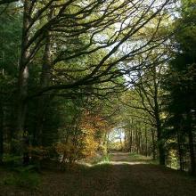 ...noch mehr Wald...😉