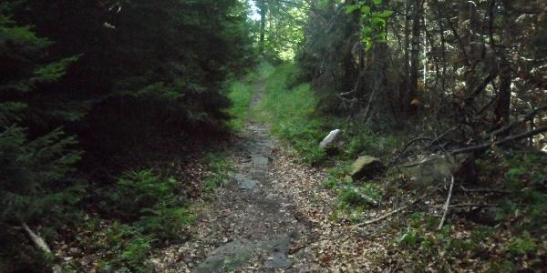 Almhausweg: Wegverlauf 51er-Weg durch den Buchwald