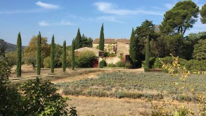 Provencal Farm