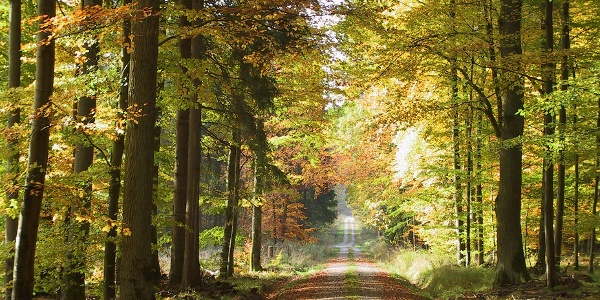 Malerische Waldwege