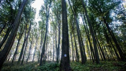 Zalai erdő Lasztonya közelében