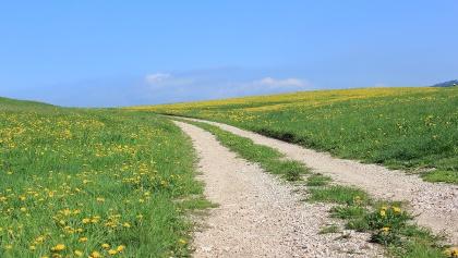 strada tra prato fiorito