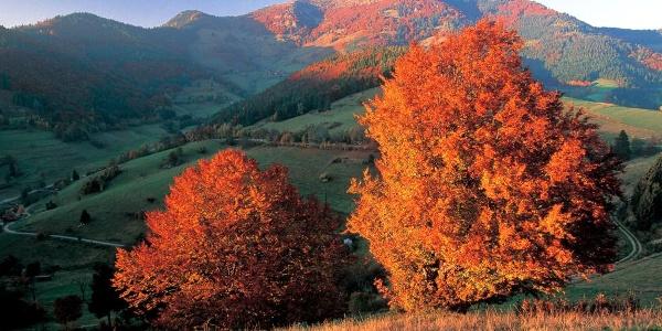 Der Belchen im Herbst