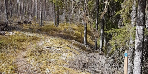 The Saint's Trail, close to Laforsen