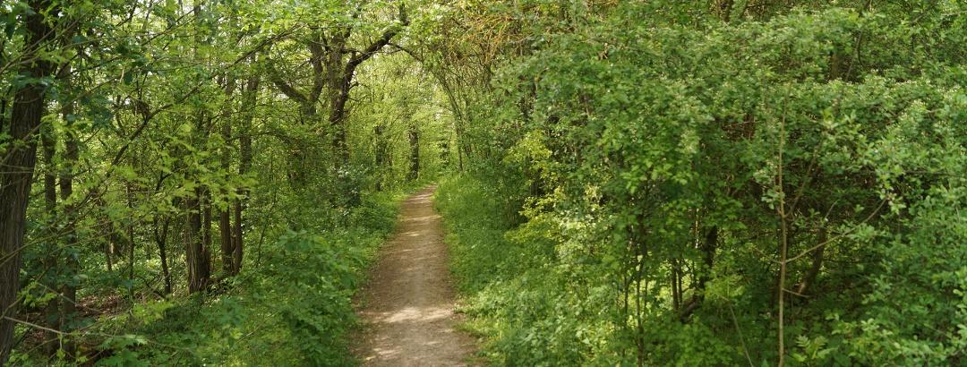 Waldpfad vor Münnerstadt