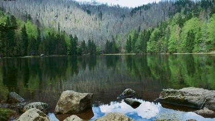Der Rachelsee