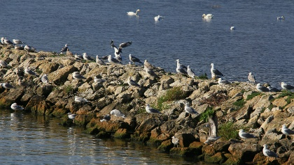 Vogelparadies La Sauge.