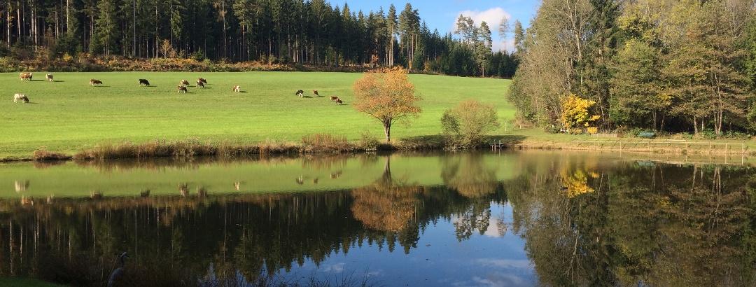 ein künstlich angelegter Teich südwestlich des Freudenberges in Witsch - am Weg nach Tigring - Südansicht