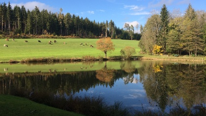 Teich, süddwestlich vom Freudenberg, künstlich angelegt