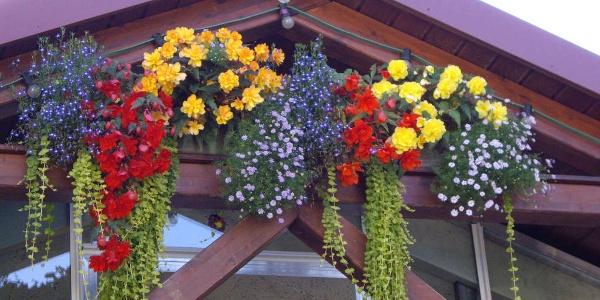 Blumen Ressmann