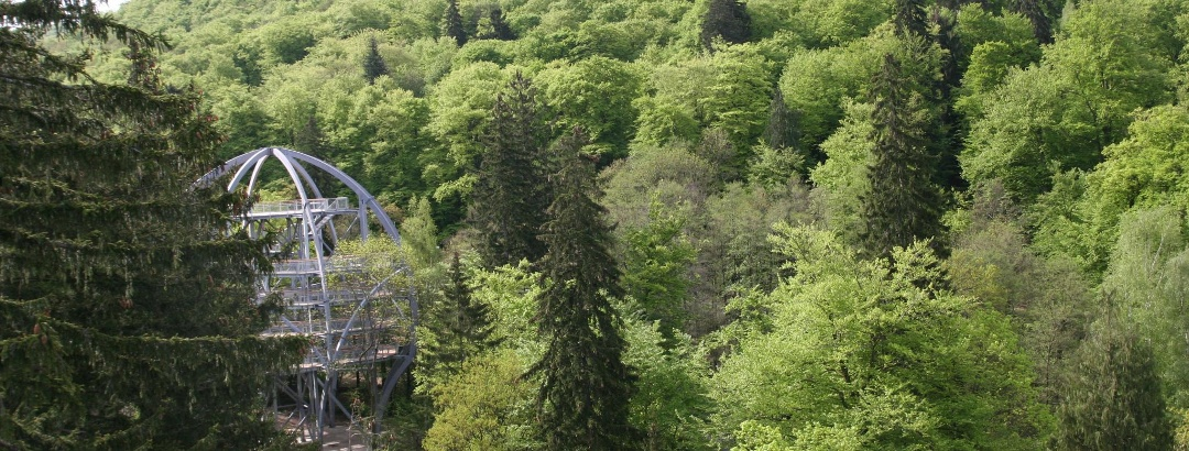 Blick von der Burgberg-Seilbahn auf den Baumwipfelpfad HARZ