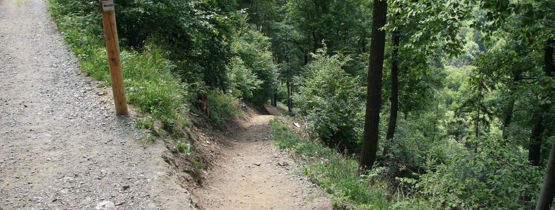 """Abzweigung zur Abkürzung (steilen Auf-/Abstieg) Baumwipfelpfad, links die """"Leichte Strecke"""""""