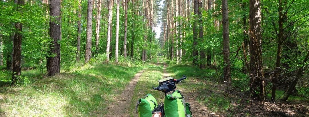 Im Oberkrämer Wald