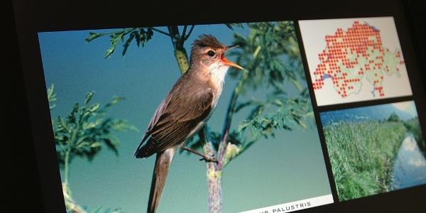 Vögel in der Vogelwarte interaktiv entdecken.